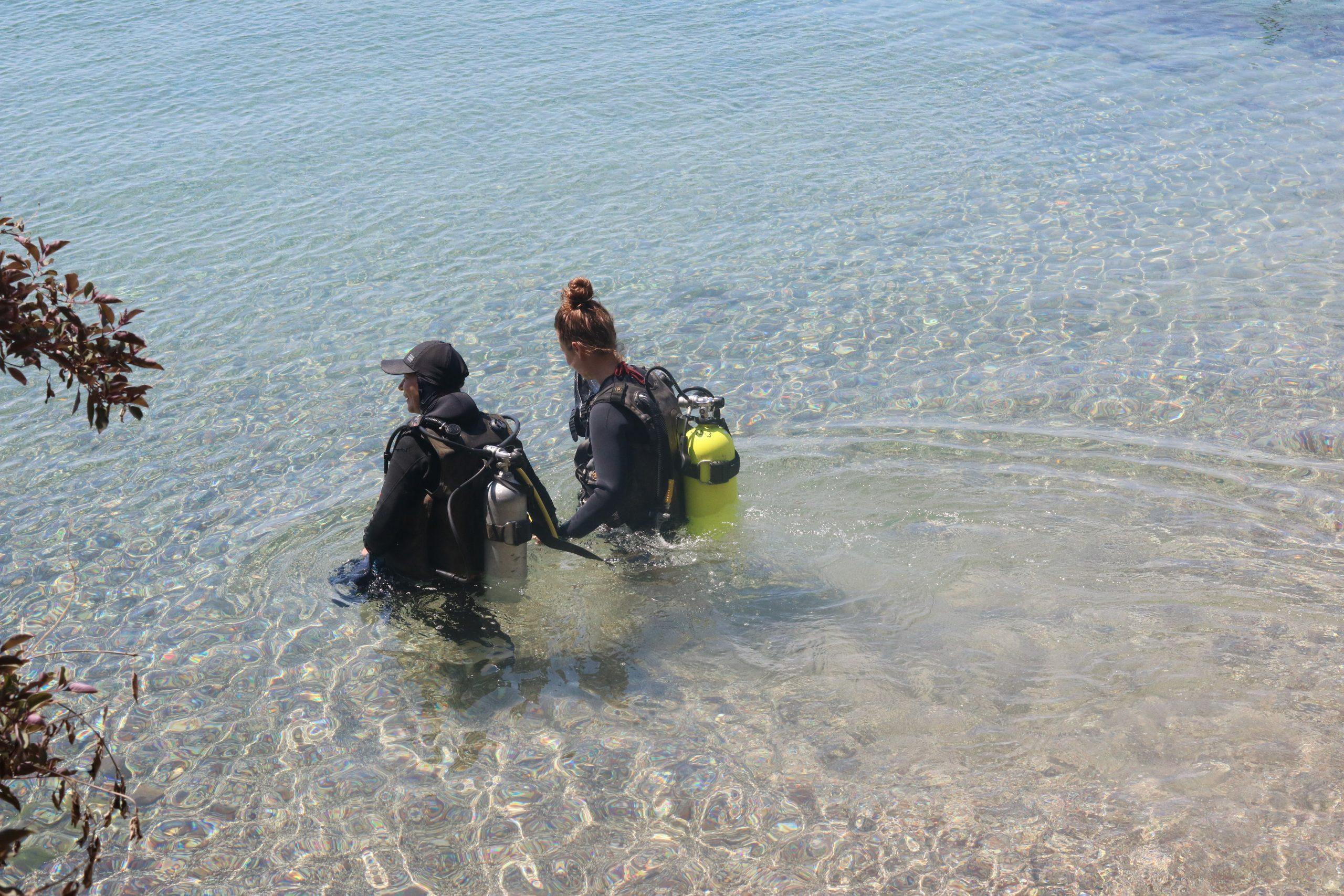 zwemmen met dolfijnen Eilat